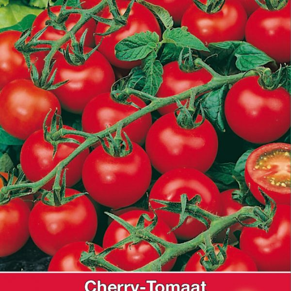 Tomaat Gardeners Delight