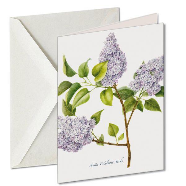 Kaart Syringa vulgaris Lilac