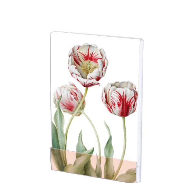 Notepad Tulipa 'Teyler'