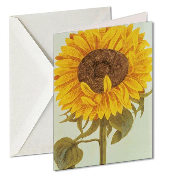 Museumkaart 'Chrysanthemum'