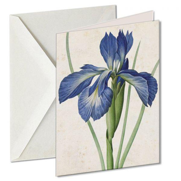 Museumkaart 'Iris xiphioides'