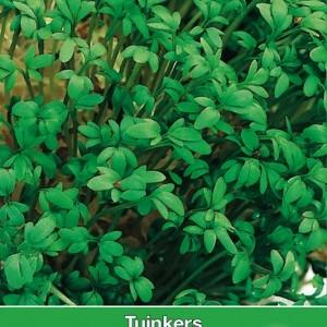 Tuinkers / Lepidium