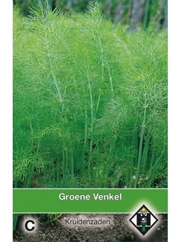 Groene Venkel / Foeniculum