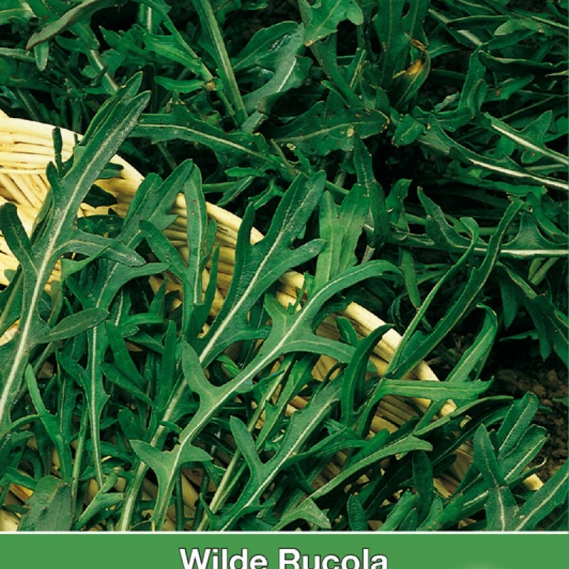 Wilde Rucola Sylvetta / Diplotaxis