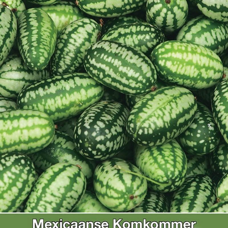 Mexicaanse Komkommer, Zehneria scabra
