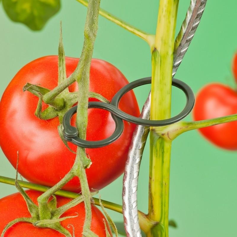 Plantenringen, tomaat