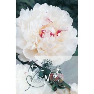 Catalogus 1992, voorjaar