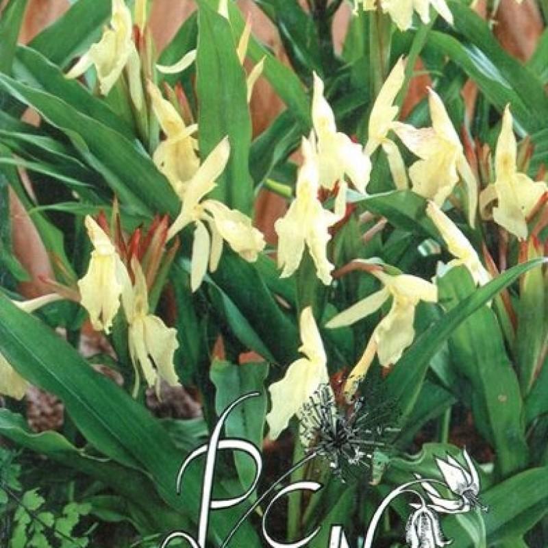 Catalogus 1994, voorjaar