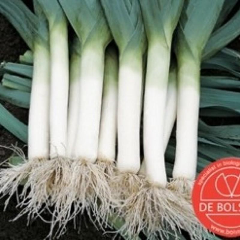 Prei,  Allium ampeloprasum var. porrum 'Blauwgroene Herfst'