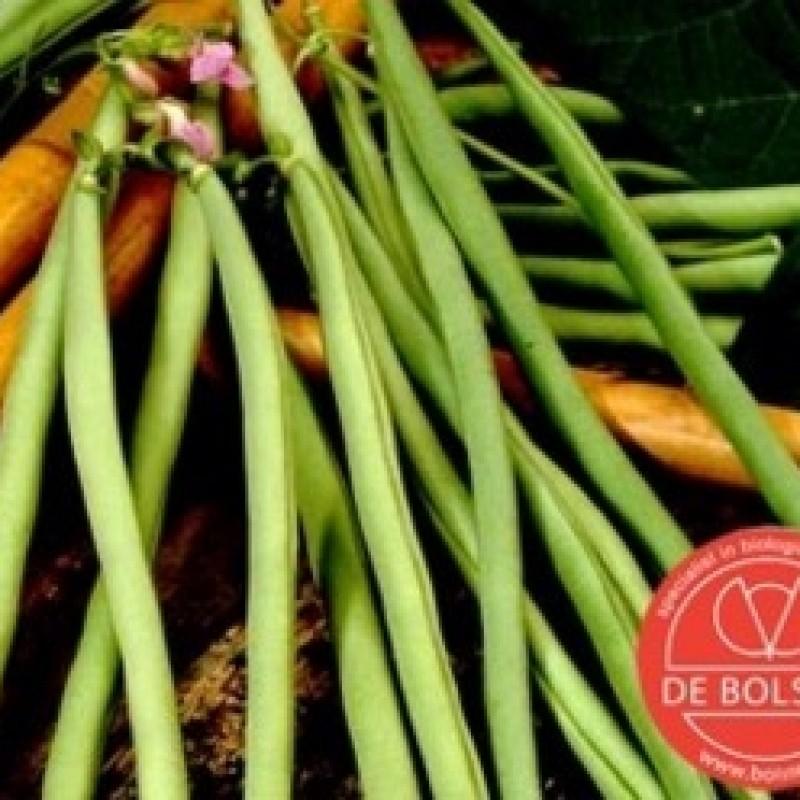 Stokslaboon, Phaseolus vulgaris ' Cobra'