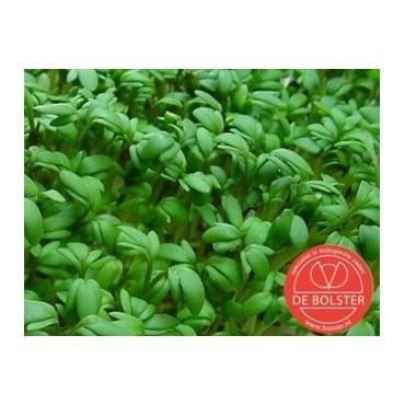 Tuinkers, Lepidium sativum 'Cressida'