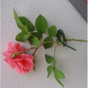 Plantenklemmen, klimplantengeleiders