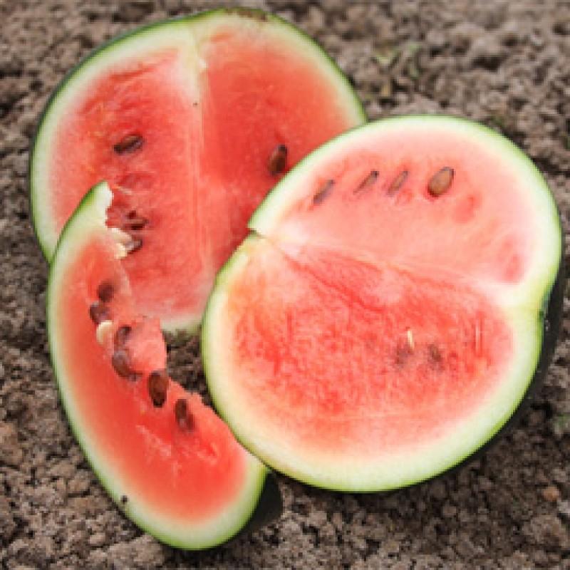 Watermeloen Sugar baby, Citrullus lanatus