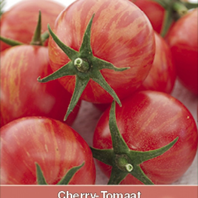 Cherry-Tomaat, Lycopersicon esculentum 'Pink Bumble Bee'