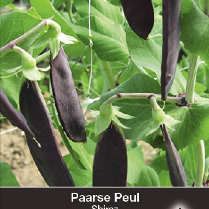 Paarse peul, Pisium sativum 'Shiraz'