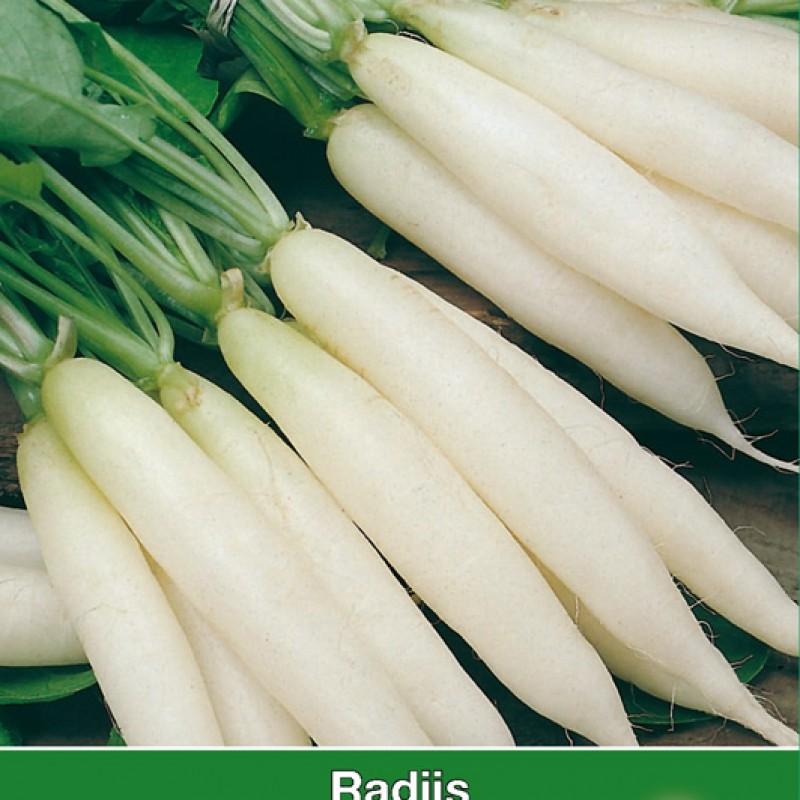 Radijs, Raphanus sativus 'IJskegel'