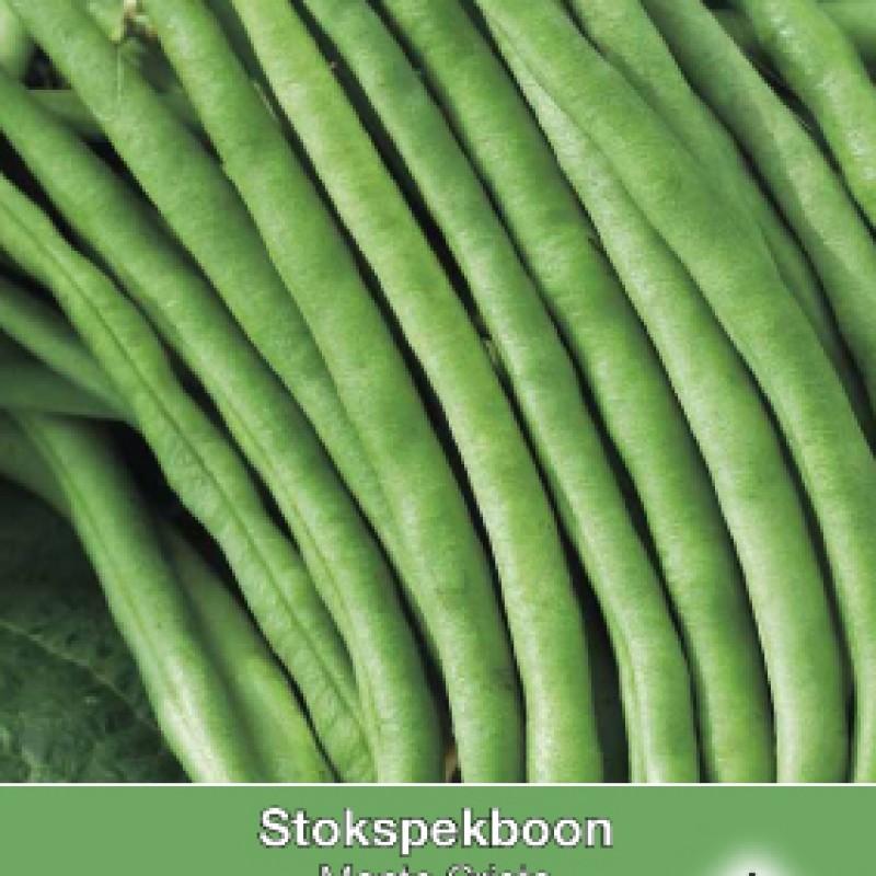 Stokspekboon, Phaseolus vulgaris 'Monte Cristo' , 30 gr.