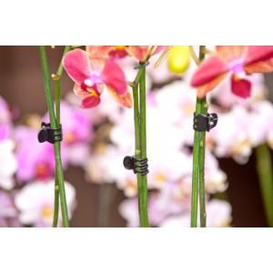 Plantenklemmen, orchideeènclips