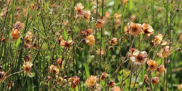 Uitgelicht- Vaste planten combinaties